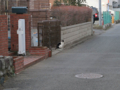 Cat of Back Lane, #1147