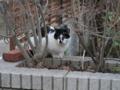 Cat of Back Lane, #1148