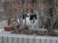 Cat of Back Lane, #1149