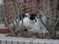 Cat of Back Lane, #1150
