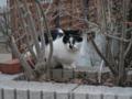 Cat of Back Lane, #1151