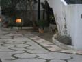 Cat of Back Lane, #1152