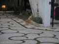 Cat of Back Lane, #1153