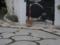 Cat of Back Lane, #1154