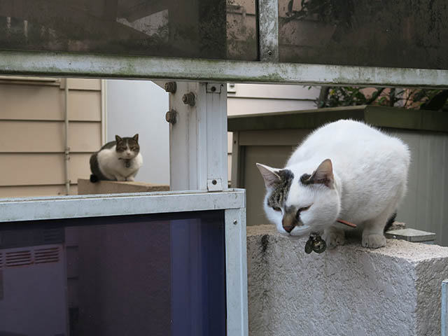 Sora & Koyuki, #1222
