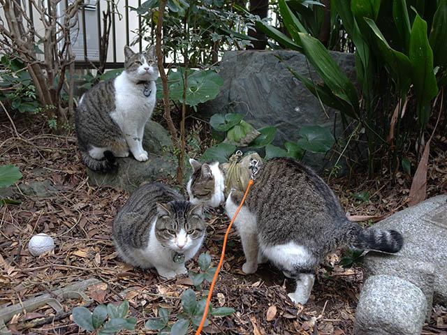 Yuki, Koyuki & Hoshi, #7674