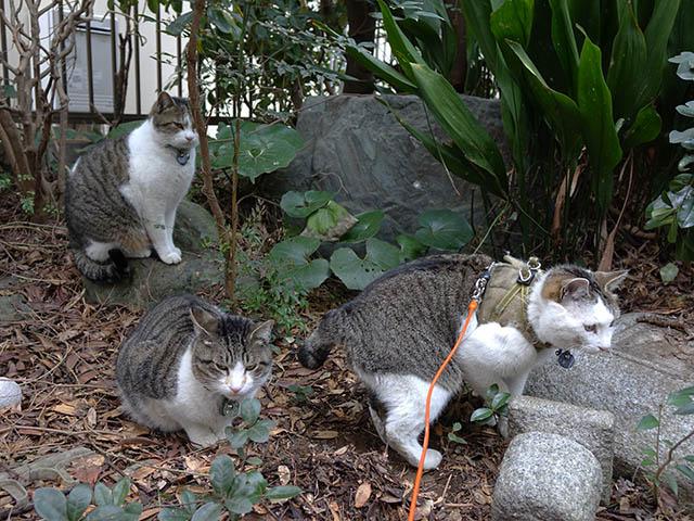 Yuki, Koyuki & Hoshi, #7675