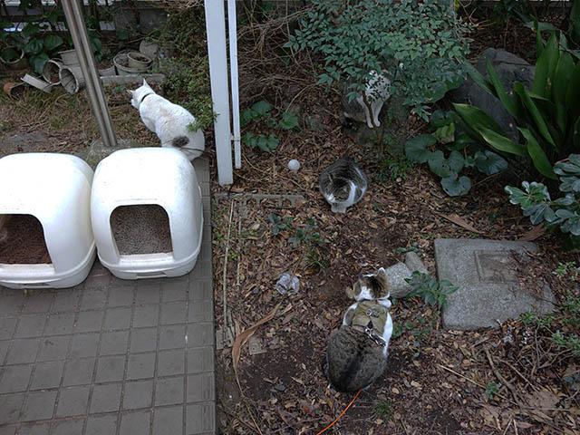 Sora, Yuki, Koyuki & Hoshi, #7681