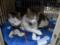 Koyuki & Hoshi, #7699