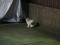 Local Cat, #1252