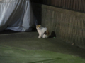 Local Cat, #1253