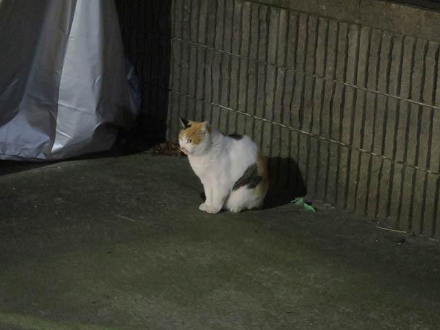 Local Cat, #1254