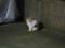 Local Cat, #1255