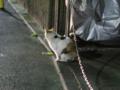 Local Cat, #1256
