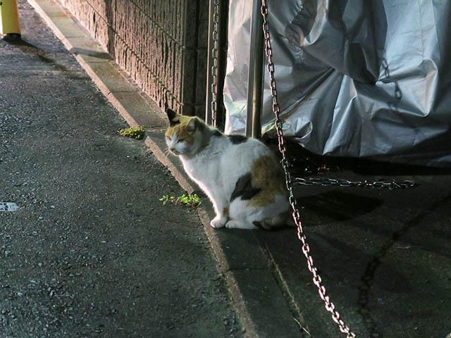 Local Cat, #1257