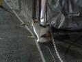 Local Cat, #1258