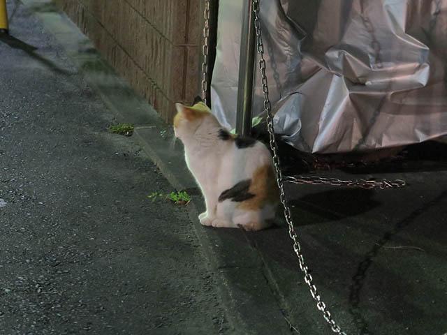 Local Cat, #1259
