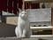 白峯寺の猫, #8045