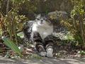 白峯寺の猫, #8046