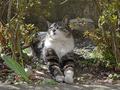 白峯寺の猫, #8047