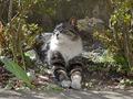 白峯寺の猫, #8048