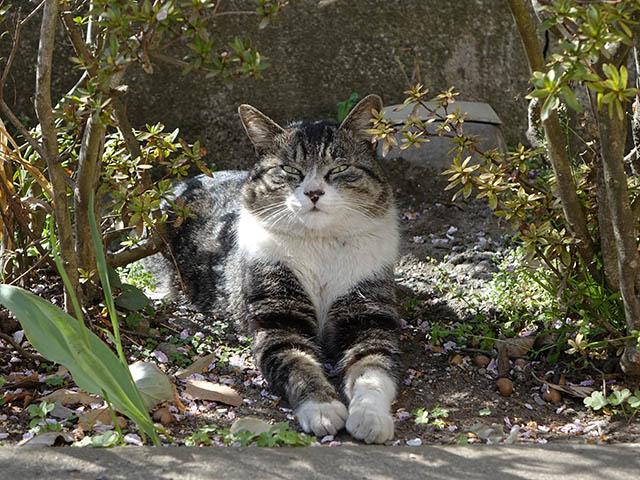 白峯寺の猫, #8049