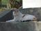 白峯寺の猫, #8050