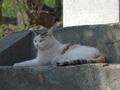 白峯寺の猫, #8051