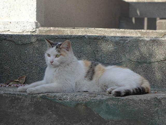 白峯寺の猫, #8052