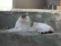 白峯寺の猫, #8053