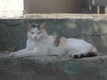 白峯寺の猫, #8054