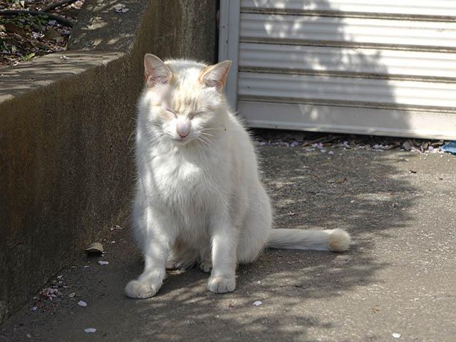 白峯寺の猫, #8055