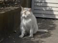 白峯寺の猫, #8056