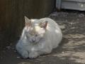 白峯寺の猫, #8058