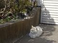 白峯寺の猫, #8059