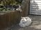 白峯寺の猫, #8060