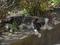 白峯寺の猫, #8063