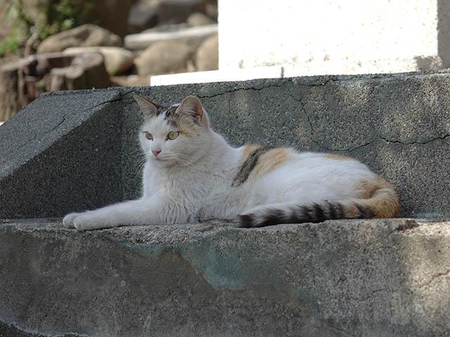 白峯寺の猫, #8065