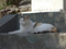 白峯寺の猫, #8066