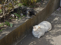 白峯寺の猫, #8067