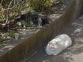 白峯寺の猫, #8068