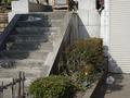 白峯寺の猫, #8069