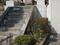 白峯寺の猫, #8070