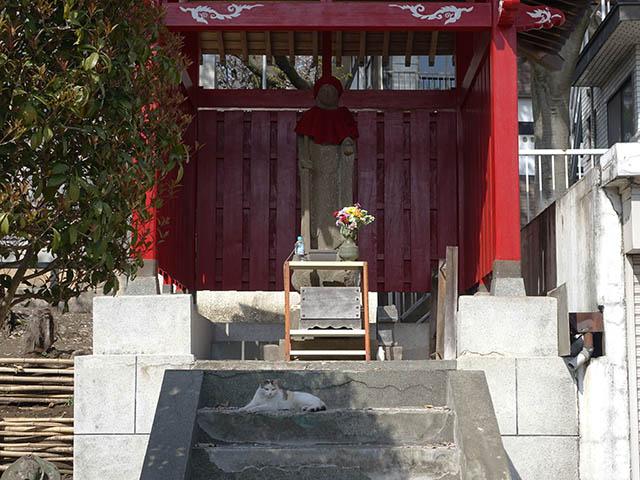 白峯寺の猫, #8071