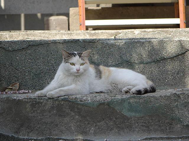 白峯寺の猫, #8072