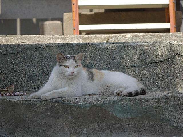 白峯寺の猫, #8073