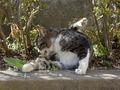 白峯寺の猫, #8078