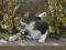 白峯寺の猫, #8079