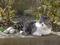 白峯寺の猫, #8081