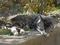 白峯寺の猫, #8082